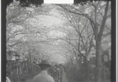 0059.5mm映像内檀葛桜